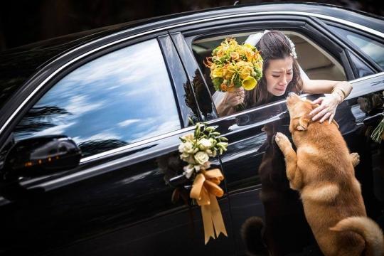 Noiva se emociona ao se despedir do seu cão e a imagem ganha prêmio
