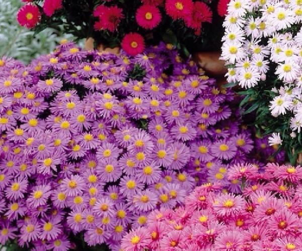 Que flor usar?