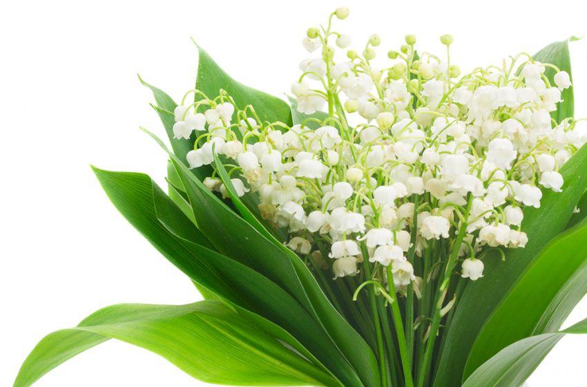 Flores muguet e a tradição de primeiro de maio