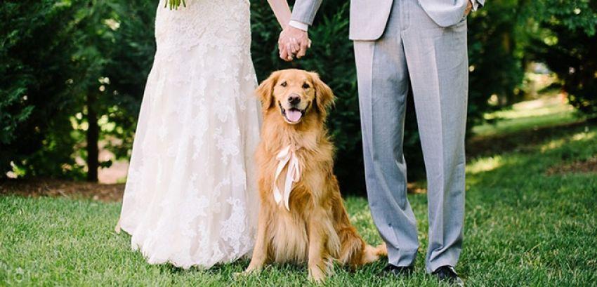 Inspire-se: Cachorro no casamento